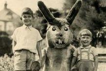 ✪ rabbit ✪