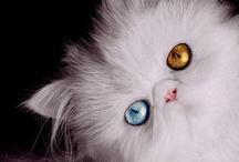 Cats, gatitos & bichanos
