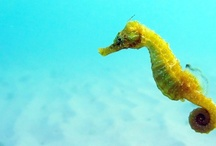 Under the Sea / In our past life we were a seahorse.  A little underwater dragon that uses it tail to hang on during the stormy tides. / by Salt + Stone