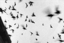 Bats / by TheJungleStore.com