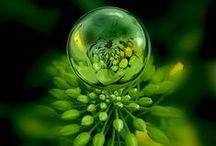 Green / Green is associated with the heart chakra and symbolizes health, creativity, abundance and peace.