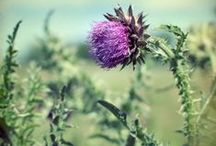 Thistle Seasons / Thistles throughout the year. / by Thistle Farms