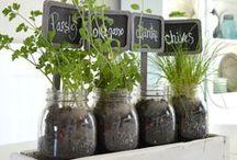 indoor & hydroponics gardening