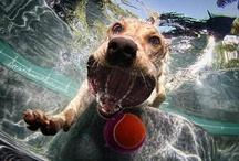 Fun Photography / by Jana Ballard