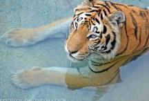 Disney's Animal Kingdom / by Focused on the Magic Blog