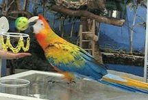 Parrot Training and Behavior