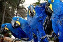 Parrot Articles