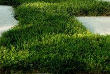 GARDEN trawniki