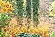Garden  kompozycje