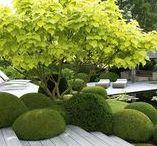 GARDEN zieleń publiczna