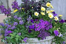 Container Garden Ideas for All Seasons / Container gardens are the perfect way to bring flowers and foliage to your home or apartment.
