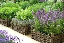Raised Garden Beds / Everything there is to know about raised garden beds or raised bed gardening.
