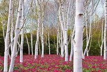 GARDEN pod drzewami