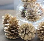 Pine Cone Projects / Crafts made with pine cones.