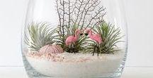 INSPIRE & DIY - FLOWER, DECOR micro garden - mała zieleń