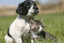 Pets / Animals are more than pets—they're family! You'll be inspired by these sweet animal stories and appreciate these dog and cat care tips.  / by Woman's Day