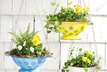 Gardening / Try these beautiful, easy, and cheap gardening and outdoor ideas to make your home look its best. Whether you're a beginner or a pro—these tips and and must-try ideas will save you time and money. / by Woman's Day