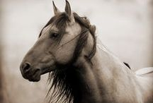 Horses / by AnnMarie French