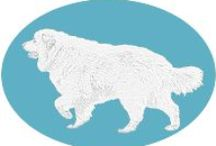 Clowie's Corner / My blog - life from the perspective of a Pyrenean Mountain Dog (Great Pyrenees)