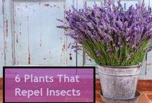 Organic Food Garden / Organic gardening tips