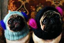 Knit & Crochet / by Sara Kay Hartmann