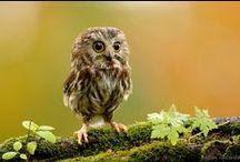 Trees & Owls / by Venetia Swensen
