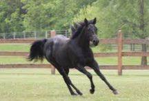 Horses / Horses, I love the beauty of horses! / by Kim Clifford