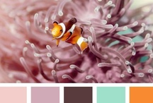 Color Stories and Inspirations