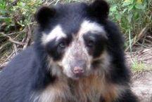Ecuador Animals & Plants / All the amazing animals and plants in Ecuador, South America