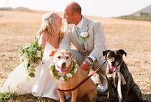 Wedding Photography / by Danielle Keister-Hansen