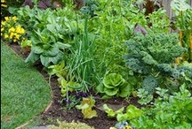 Gardening and landscaping ideas / by Venetia Swensen