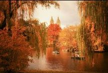 "Autumn / ""I'm so glad I live in a world where there are Octobers."" ― L.M. Montgomery, Anne of Green Gables"