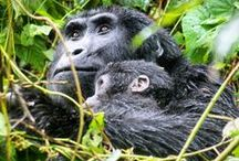 Uganda: Things to do, places to see / All about Uganda, Africa. Food, things to do, places to see, where to stay...