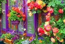 Gardening / by Mindi Scott