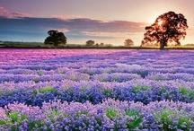 FLOWERS / by Bobbi Thomas
