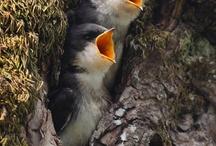 Birds / by Eunice Luscombe