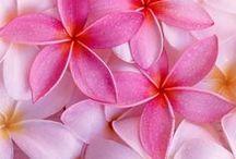 Hawaiian Flowers / Tropic Flowers
