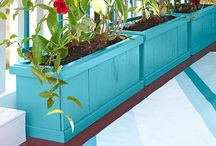 For the Yard / Landscape, curb appeal  / by Diana Zamora