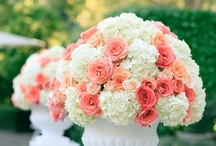 wedding / by Adriene Essex Williams