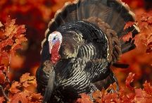 Turkey Day / Thanksgiving / by Brooke Vance