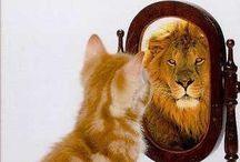 I'm a Leo!!! So like roar & stuff!!! / August & Leo's  / by Brooke Vance