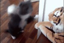 パパパンチ猫GIF / 打て!打つんだ!猫パンチ!