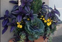 Yard and garden stuff / yard care, gardening tips and ideas / by Regina C