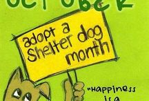 Opt To Adopt / Consider adopting a Shelter or Rescue Pet.  A best friend for life is waiting for you! / by Christine Turner