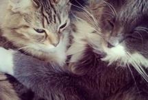 Boo & Molly