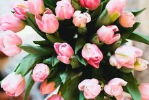 a floral obsession . / - beautiful blooms - / by Temi Brown