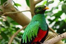 Safarious Birds