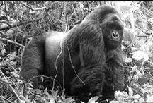 Safarious Primates