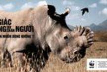 Safarious Rhinoceros
