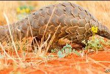 Safarious Wildlife